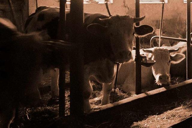 Längst nicht alles, was nach Tierwohl klingt, nützt tatsächlich den Tieren