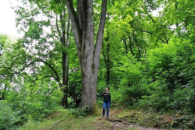 Todtnaus neue Försterin Susanne Berger ist begeistert vom Lebensraum Wald