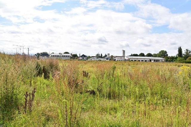 Gericht entscheidet Baulandstreit in Breisach
