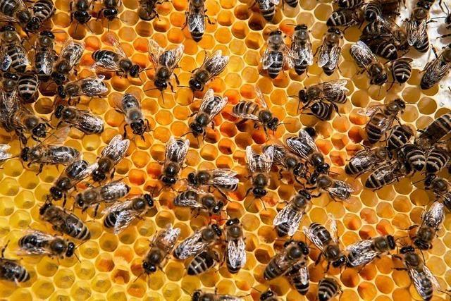 Bienenvolk in Müllheim gestohlen