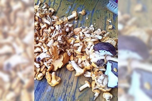 Ein gutes Jahr für Pilzsammler