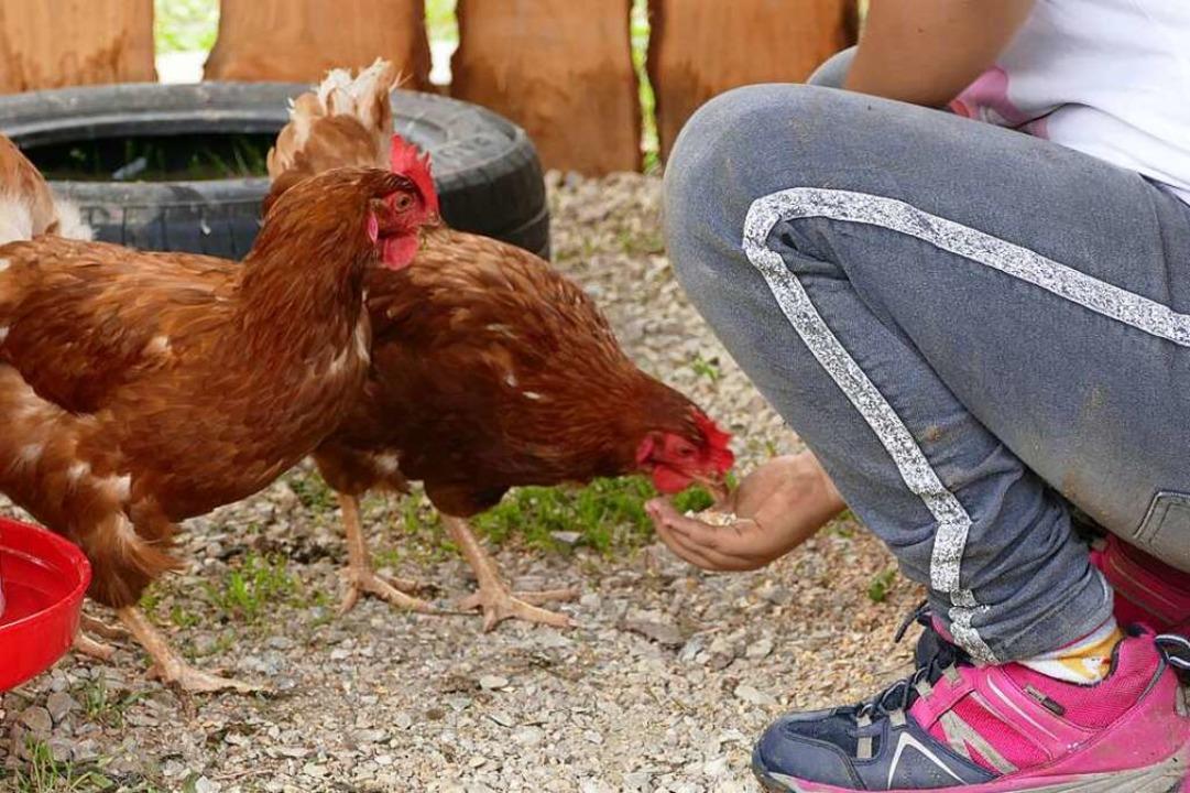 Zutraulich sind die Hühner mit den Kindern schon – und andersrum auch.    Foto: Dora Schöls