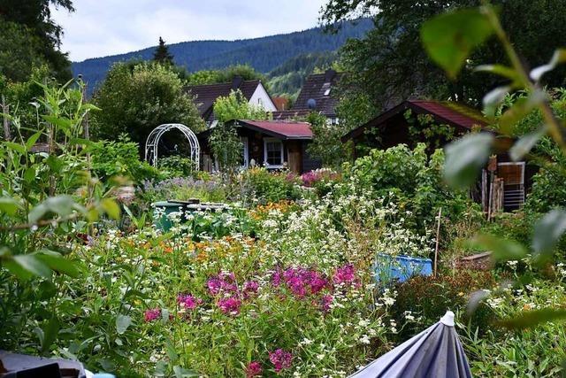 Die Nachfrage nach Kleingärten wächst