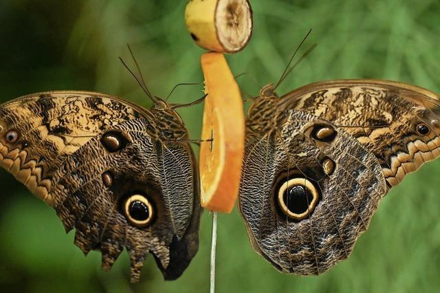 Schmetterlingshaus eröffnet