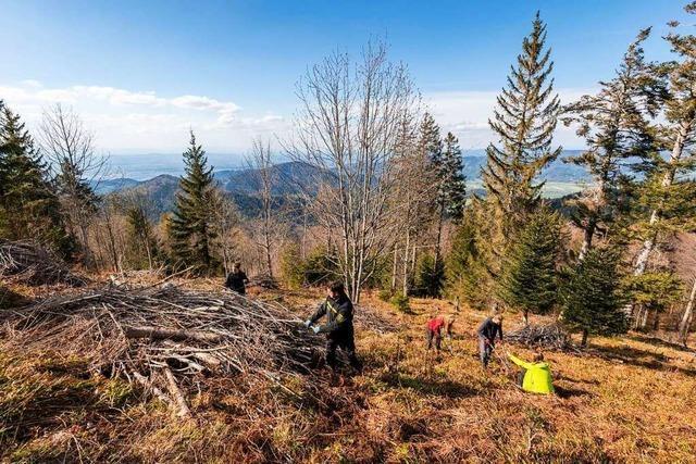 Voluntourismus: Im Urlaub am Rohrhardsberg die Natur pflegen