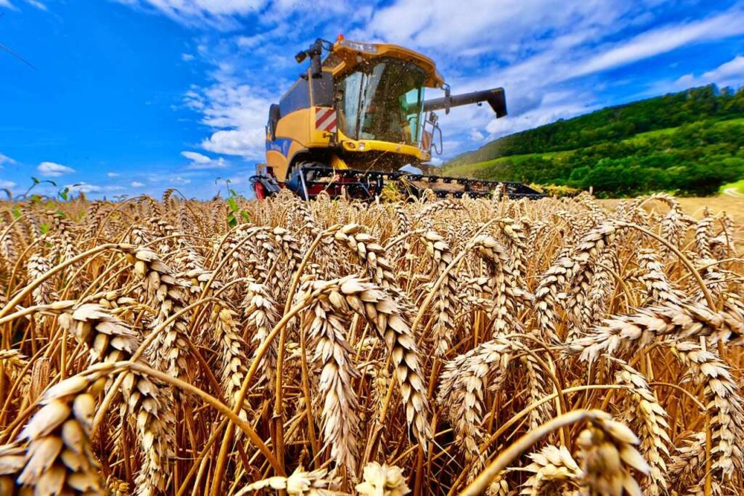 Getreideernte auf einem Feld bei Ehrenstetten   | Foto: Siegfried Gollrad