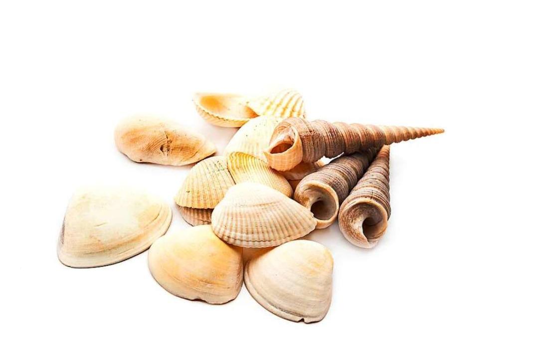 Wer Muscheln finden will, muss auf Reisen gehen.  | Foto: kowit