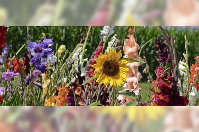 Bunte Blütenpracht