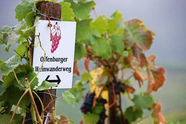 Weinspaziergang ersetzt den abgesagten Offenburger Weinwandertag