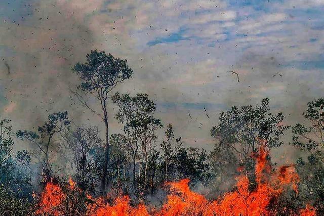 Das Pantanal erlebt die schlimmste Trockenzeit seit Jahrzehnten