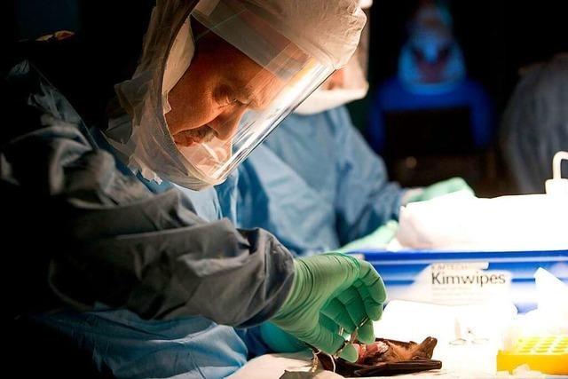 WHO gibt Ausbruch von Marburg-Fieber in Westafrika bekannt