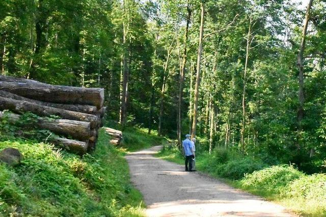Die Debatte über mehr Ökologie im Lörracher Wald hat erst begonnen