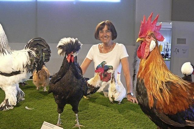 Die faszinierende Welt der Hühner