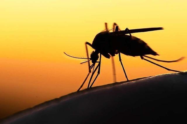 In lauschigen Sommernächten sind Stechmücken echte Spaßkiller