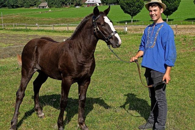 15 goldige junge Pferde