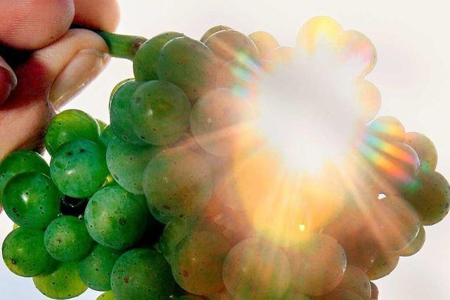 Badischer Wein trennt sich vom Slogan