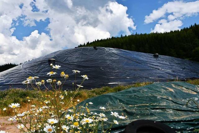 Auf dem Gipfel des Müllbergs sollen Kiefern wachsen