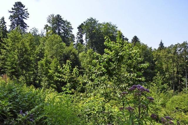 Staufen hat einen ausgezeichneten Stadtwald