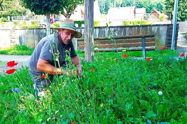 Bauhof Seelbach verwandelt Grünflächen in Blumenwiesen