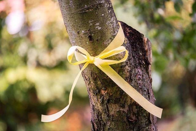 Gelbe Bänder zeigen in Waldkirch, wo legal Obst geerntet werden darf