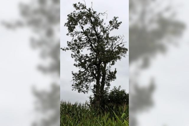 Zehn Bäume suchen Paten