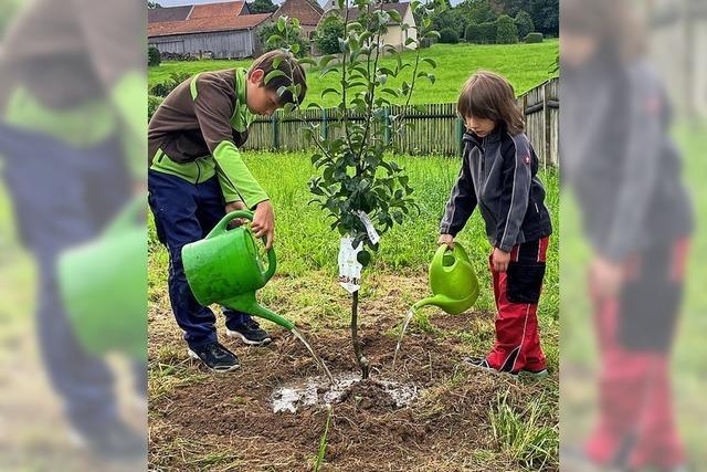 Bürger pflanzen wieder Bäume
