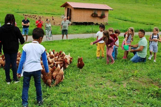 BZ-Leserinnen und -Leser besuchen 260 Hühner in Stegen