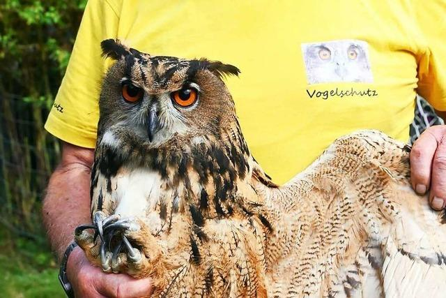 Rastatter Auffangstation für Wildvögel von amtlichem Aufnahmestopp bedroht