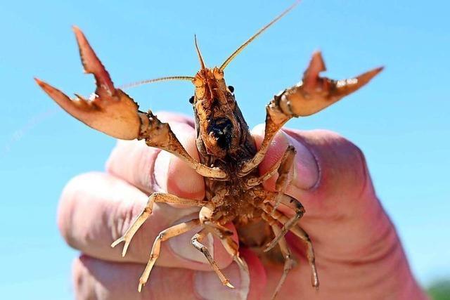 Was sind invasive Arten?