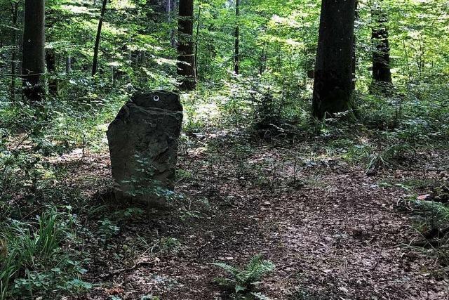 Vor zehn Jahren entstand die Idee – heute sind im Wittnauer Ruhewald bereits 450 Menschen begraben