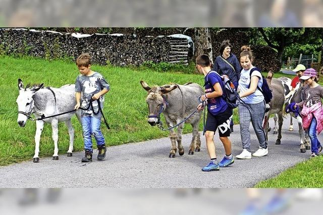 In Begleitung von Eseln macht das Wandern Spaß