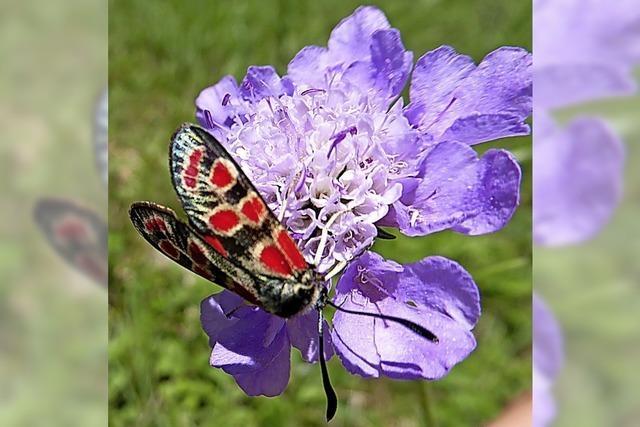 Damit sich Insekten wohlfühlen