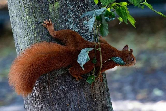 Eichhörnchen, Fuchs, Reh: Was tun, wenn's auf der Straße kracht?