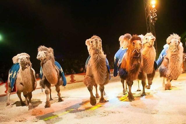 Stadt Freiburg kann Auftritte von Zirkussen mit Wildtieren nicht verbieten