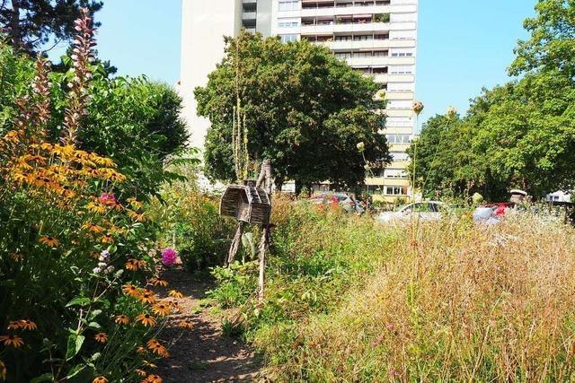 Beim Weiler Hochhaus entstand ein bunter Garten für Insekten