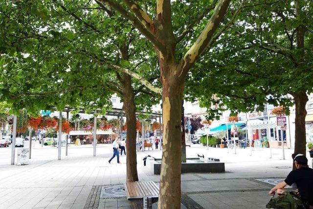 Für ein besseres Klima in Rheinfelden braucht es Wind und Schatten