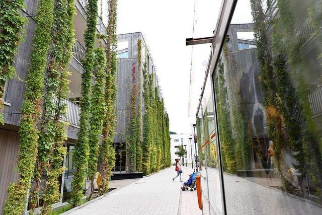Die Freiburger Stadtverwaltung will Feuerwehren und Schulen grüne Dächer verpassen
