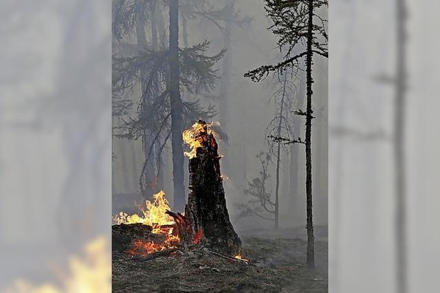 Waldbrände in Sibirien weitgehend gelöscht