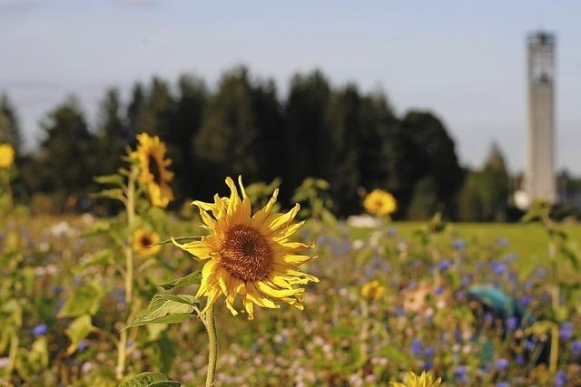 Blumenwiese auf dem Höchenschwander Berg