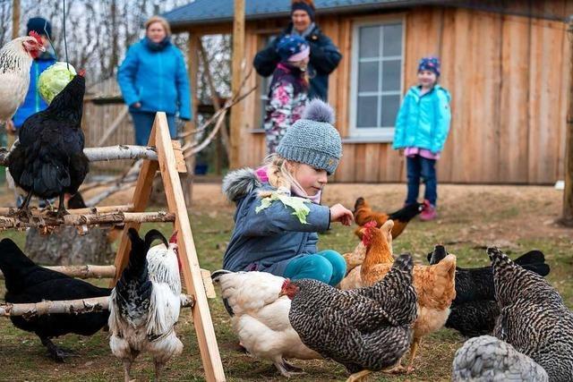 Ein Dorf in der Eifel teilt sich eine Hühnerschar