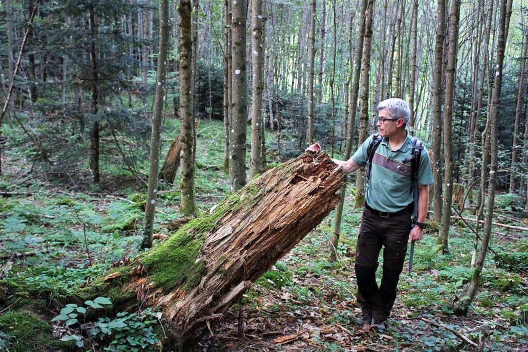 Hansjörg Bockstaller in einem vom Stur... der ohne Zutun neu entstandene Wald.   | Foto: Erich Krieger