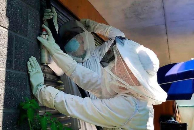 Die Feuerwehr Lörrach geht auch für und gegen Insekten in den Einsatz