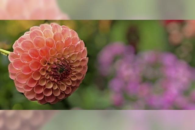 Die Blumen im Kurpark helfen über den Regen-Blues hinweg
