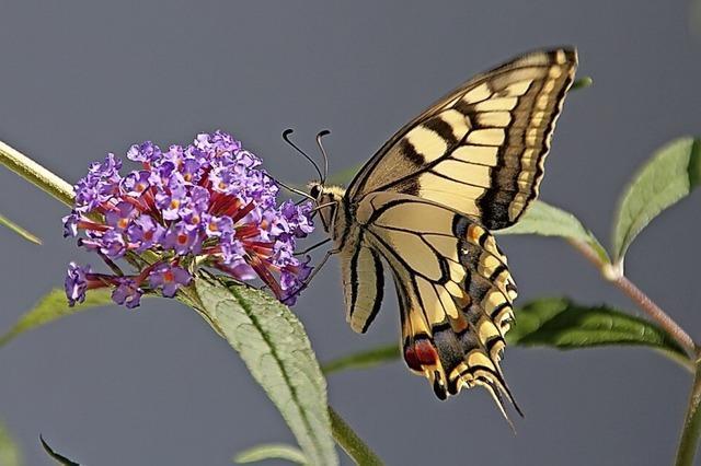 Initiative für Artenvielfalt