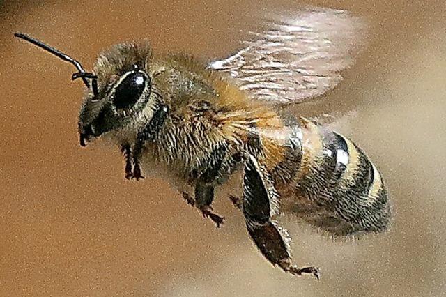 Waldbrände zerstören 9000 Bienenstöcke