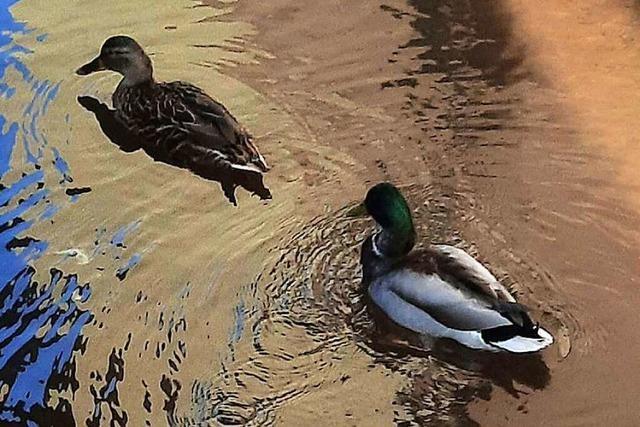 Begegnung mit Enten