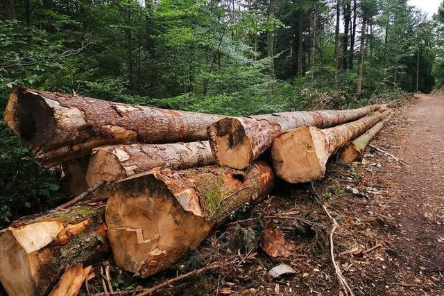 Regensommer bringt eine leichte Entspannung, aber keine Entwarnung für die Wälder im Ortenaukreis