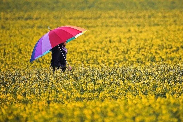 Regen führt in Gundelfingen zu einem Anstieg des Grundwassers – in Denzlingen nicht