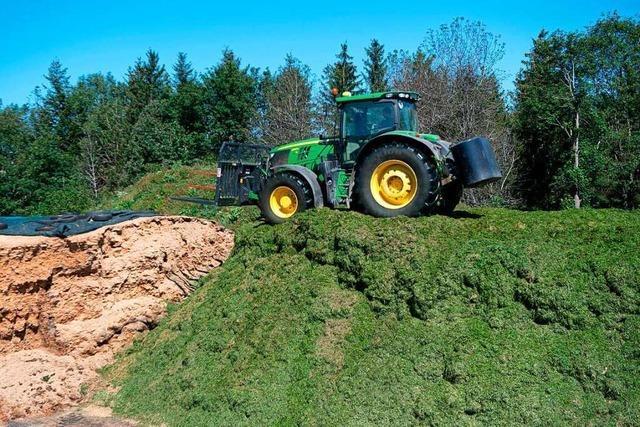 Irisches Wetter führt im Schwarzwald zu Ernte-Einbußen