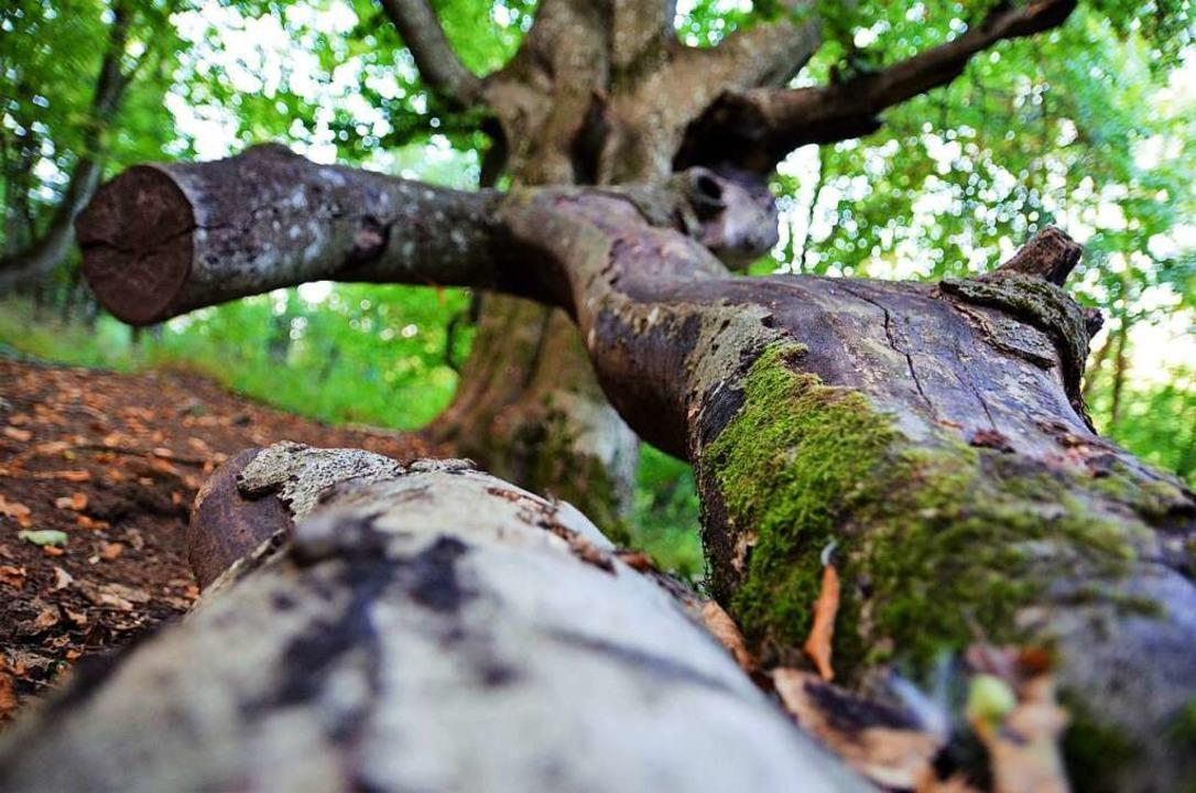 Auf dem Naturwaldpfad  | Foto: Kathrin Blum